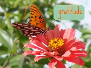 butterflyonflower_gratitude1